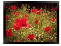 poppy field, Framed Print