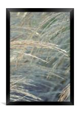 winter grass, Framed Print