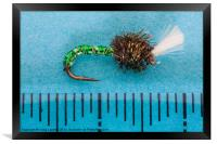suspender buzzer trout fly, Framed Print