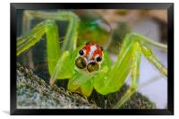 extreme macro of a spiders face, Framed Print