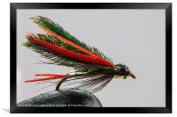 Trout fishing fly, Framed Print