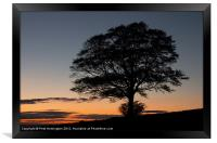 Lone tree at Sunset, Framed Print