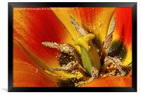 Tulip macro with orton effect, Framed Print