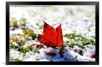 Last Autumn Leaf Standing in First Snow of Winter, Framed Print