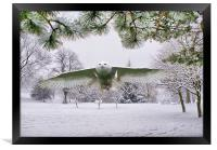 Snowy Owl In Winter Wonderland, Framed Print