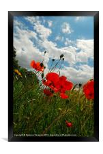 Wild poppies by nature ., Framed Print
