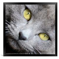 Look into my Eyes . . ., Framed Print