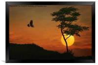 A Hawk In The Sunset, Framed Print