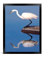Egret For Mike, Framed Print