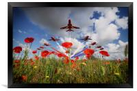 Red Arrows Poppy Fly Past, Framed Print