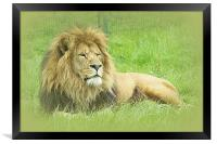 Wallace the Lionheart, Framed Print