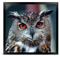 Eurasian Eagle Owl Canvases and Prints, Framed Print