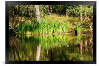 Reed Bed Reflection, Framed Print
