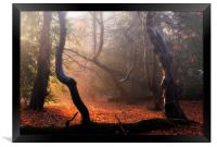 Autumn in Epping Forest, Framed Print