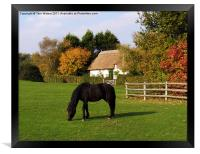 Autumn in the New Forest, Framed Print