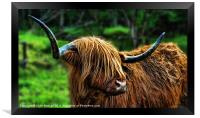 The Highland Coo, Framed Print