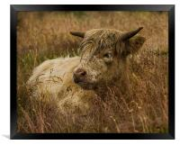 Camouflaged Cow, Framed Print