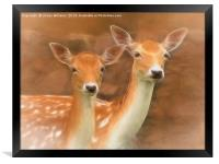 Two Fallow Deer, Framed Print
