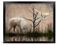 Woodland Wolf reflected, Framed Print