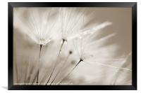 Sepia Dandelion Clock with Water Droplets, Framed Print