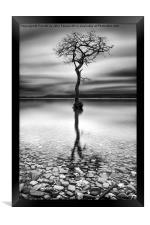 Lone Tree Milarrochy Bay, Framed Print