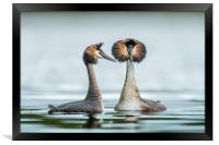 The mating game, Framed Print