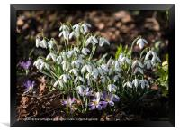 First signs of Spring, Framed Print