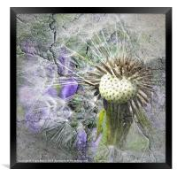 The Dandelion Cracked, Framed Print