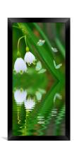 snowdrops and butterflies, Framed Print