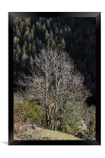 Forest in autumn, Framed Print