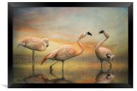 Chilean Flamingos, Framed Print