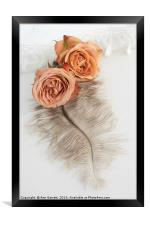 Two Old English Roses and Feather, Framed Print