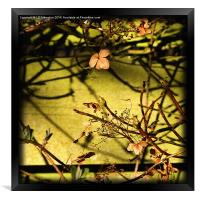 By The Fence, Framed Print