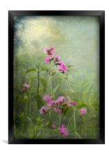 Red Catchfly (Campion), Framed Print