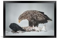 Eagle and Raven, Framed Print