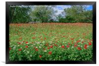 Country Color, Framed Print