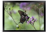 Butterfly, Buds and Petals, Framed Print
