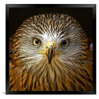 Red Kite Portrait with Texture, Framed Print