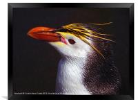 Royal Penguin Portrait, Framed Print