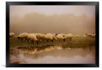 Sheep in the fog, Framed Print