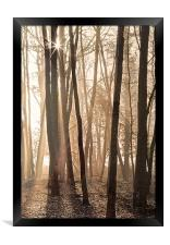 Making shadows though the tree's, Framed Print
