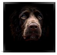 Face Of A English Cocker Spaniel Puppy            , Framed Print