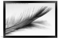 Feather and it's reflection in B&W, Framed Print