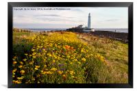 Wild flowers and St Mary's Island, Framed Print