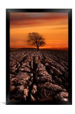 Malham tree sunrise, Framed Print