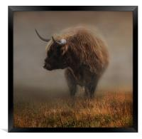 West highland cow, Framed Print