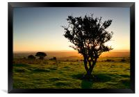 Dartmoor Sunset Tree, Framed Print