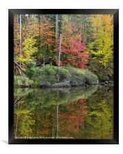 Pond Autumn Reflections, Framed Print