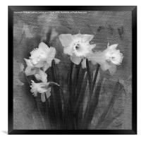 Daffodils in Black and White, Framed Print