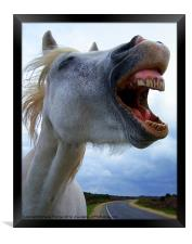 A laughing,white horse, Framed Print